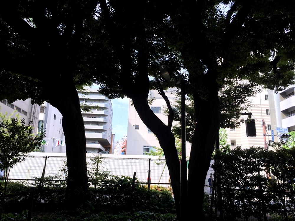 ザ・パークハウス新宿御苑_緑道から現地を見る