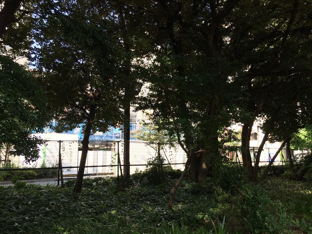 ザ・パークハウス新宿御苑_新宿御苑から眺める_2016年8月